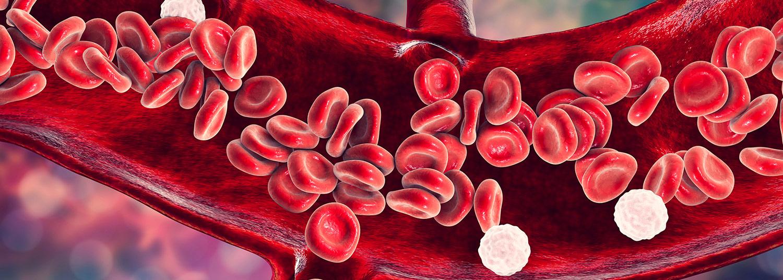 Vascular Research Banner01