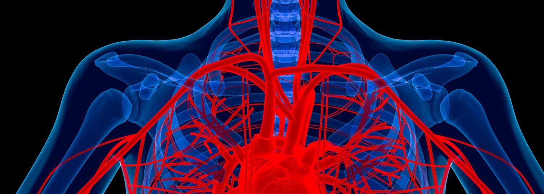 Vascular Research Banner02
