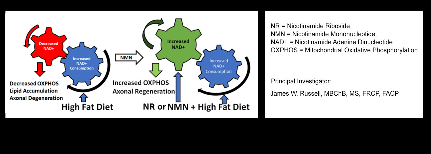 Diagram showing dietary supplement nicotinamide riboside (NR) to treat diabetic peripheral neuropathy