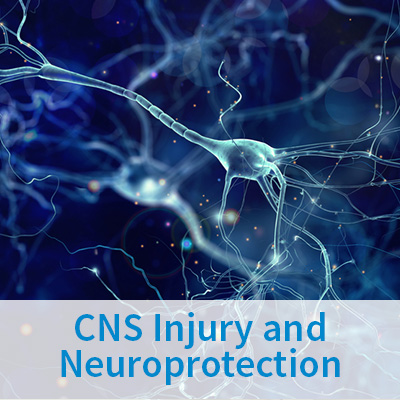 CNS Injury and Neuroprotection