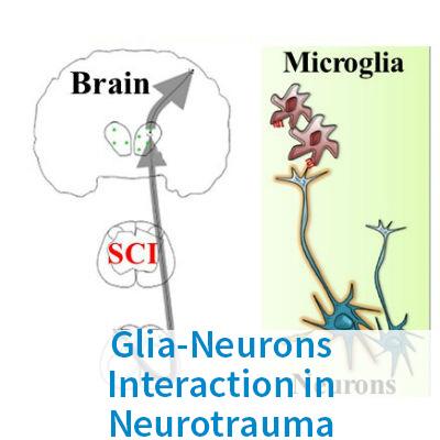 Glia-Neurons Interaction in Neurotrauma