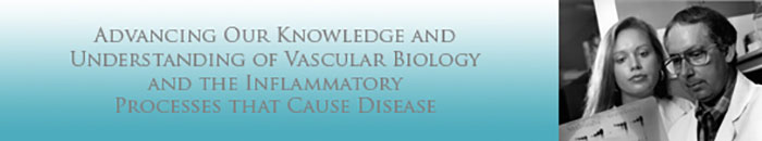 Banner: Advancing Our Knowledge and Understanding  of Vascular Biology and The Inflammatory Process That Cause Disease