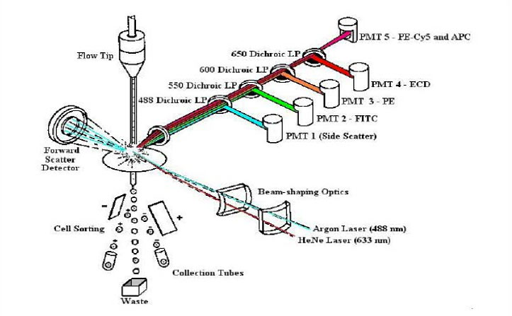 Flow-Cytometry-01