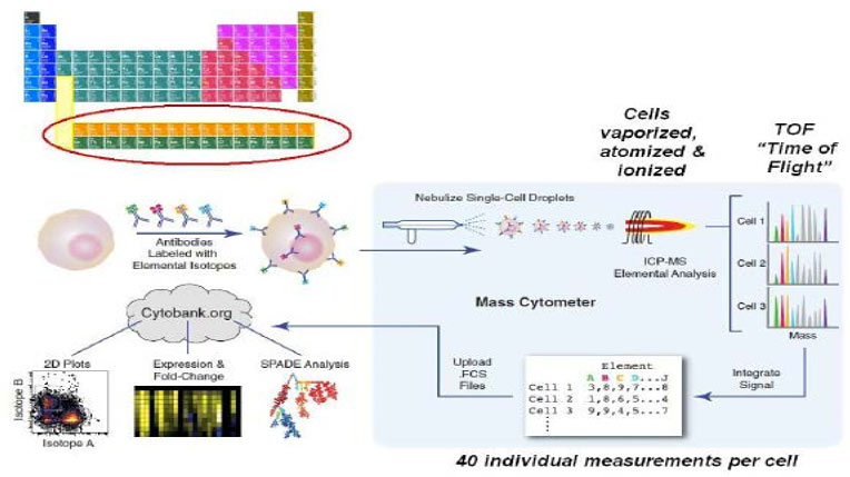 Flow-Cytometry-02