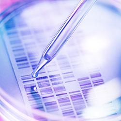 Researcher examining genetic code